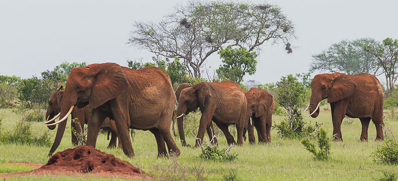 2 Days Tsavo East Safari Tour from Galu Beach