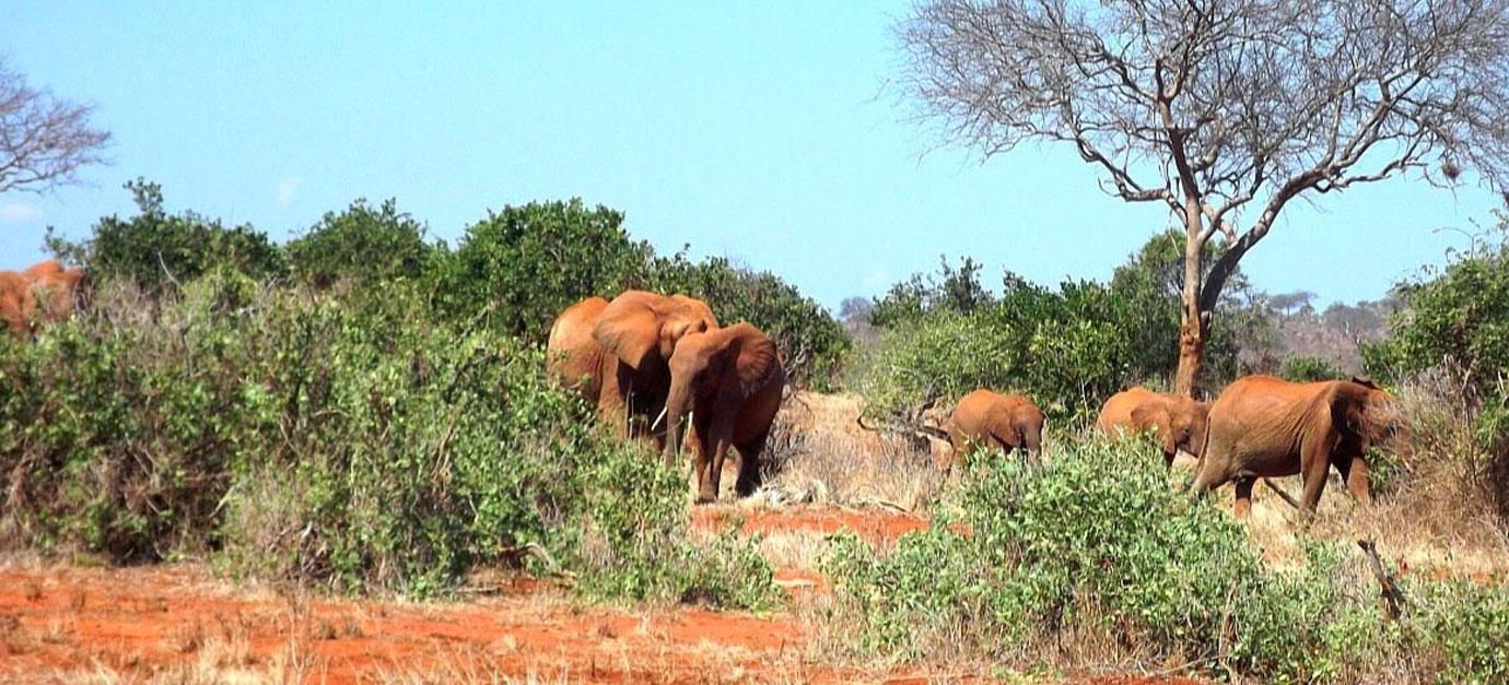 amboseli-masai-mara-safaris-from-nairobi-robert-safaris-adventure-safari-cost