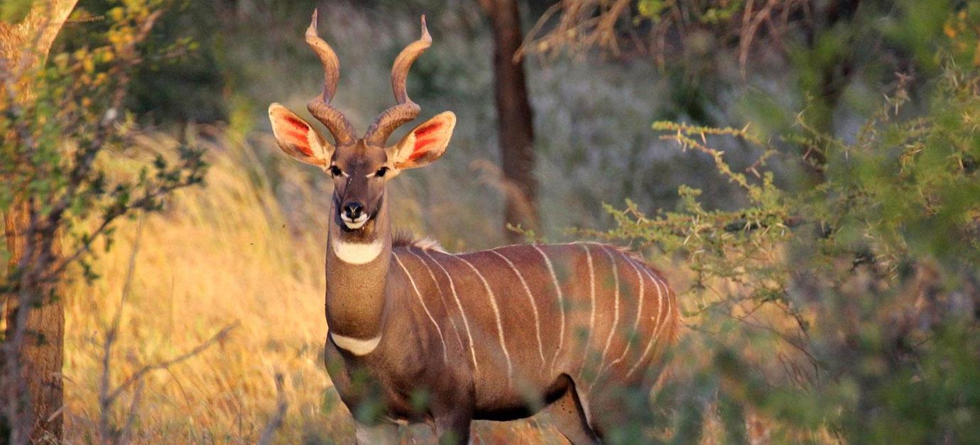 ambosli-air-safaris-from-mombasa-diani-beach-robert-safaris-adventure