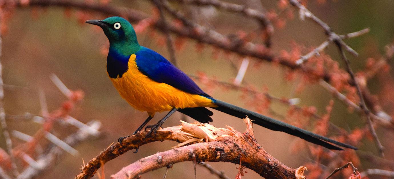 kenya-bird-watching-safaris-robert-safaris-adventure-galu-beach-price-cost