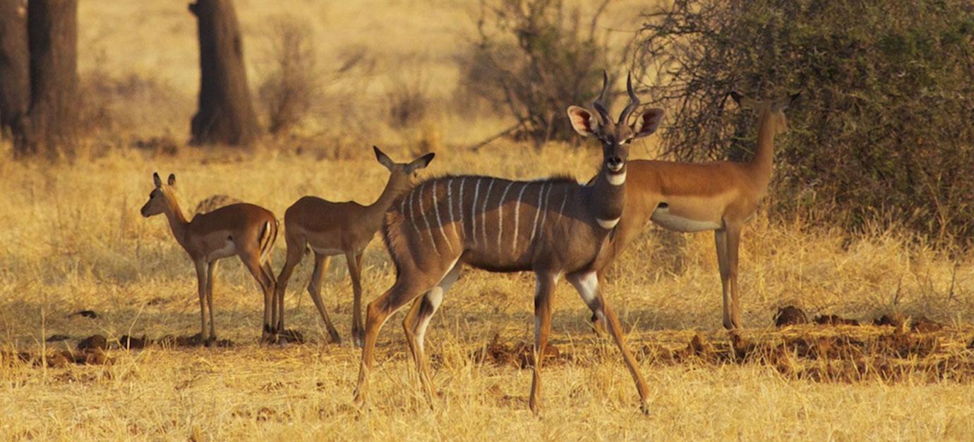kenya-safari-cost-prices-robert-safaris-adventure-kenya-safari-cost