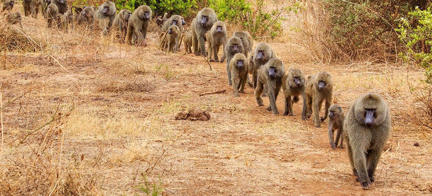 kenya-safaris-from-arusha-robert-safaris-adventure-safaris-prices