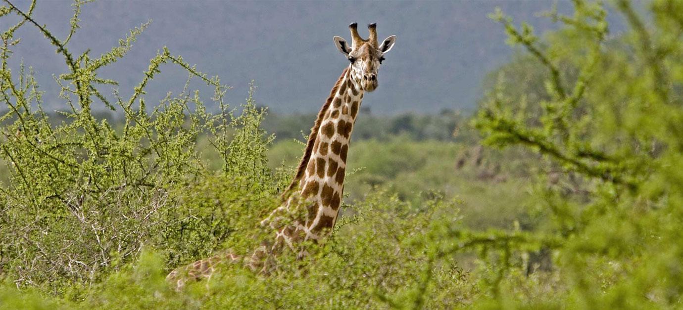kenya-safaris-from-galu-beach-diani-robert-safaris-adventure