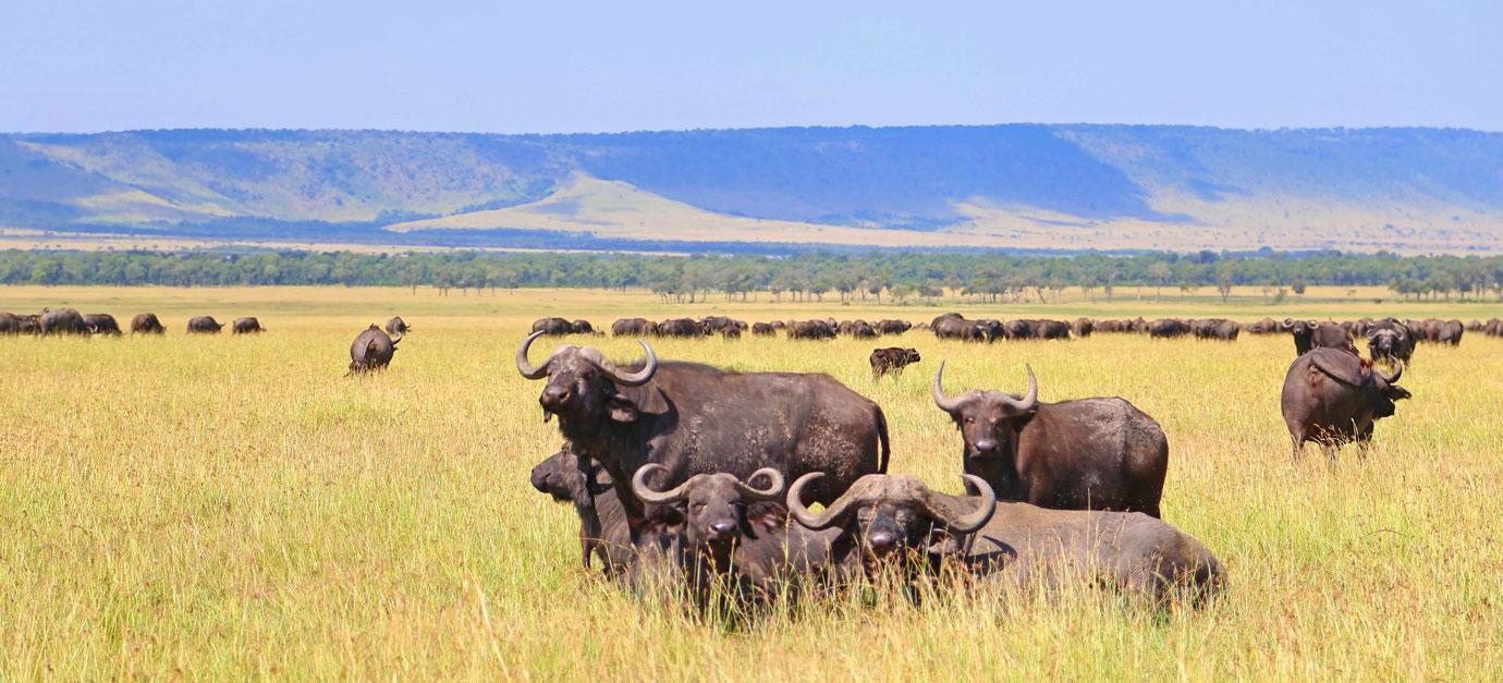 kenya-safaris-from-galu-beach-mombasa-safari-prices-tsavo-east-masai-mara-lake-nakuru-prices