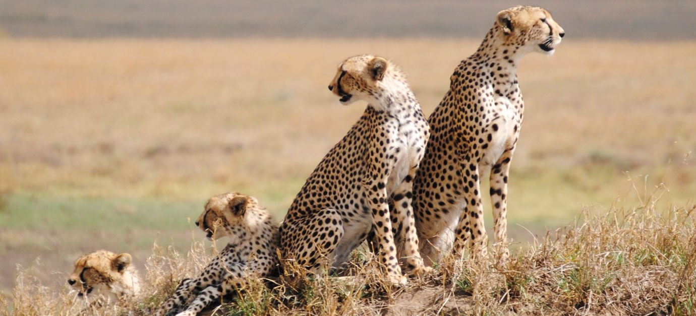 11 Days Kenya & Tanzania Safari Holiday Package