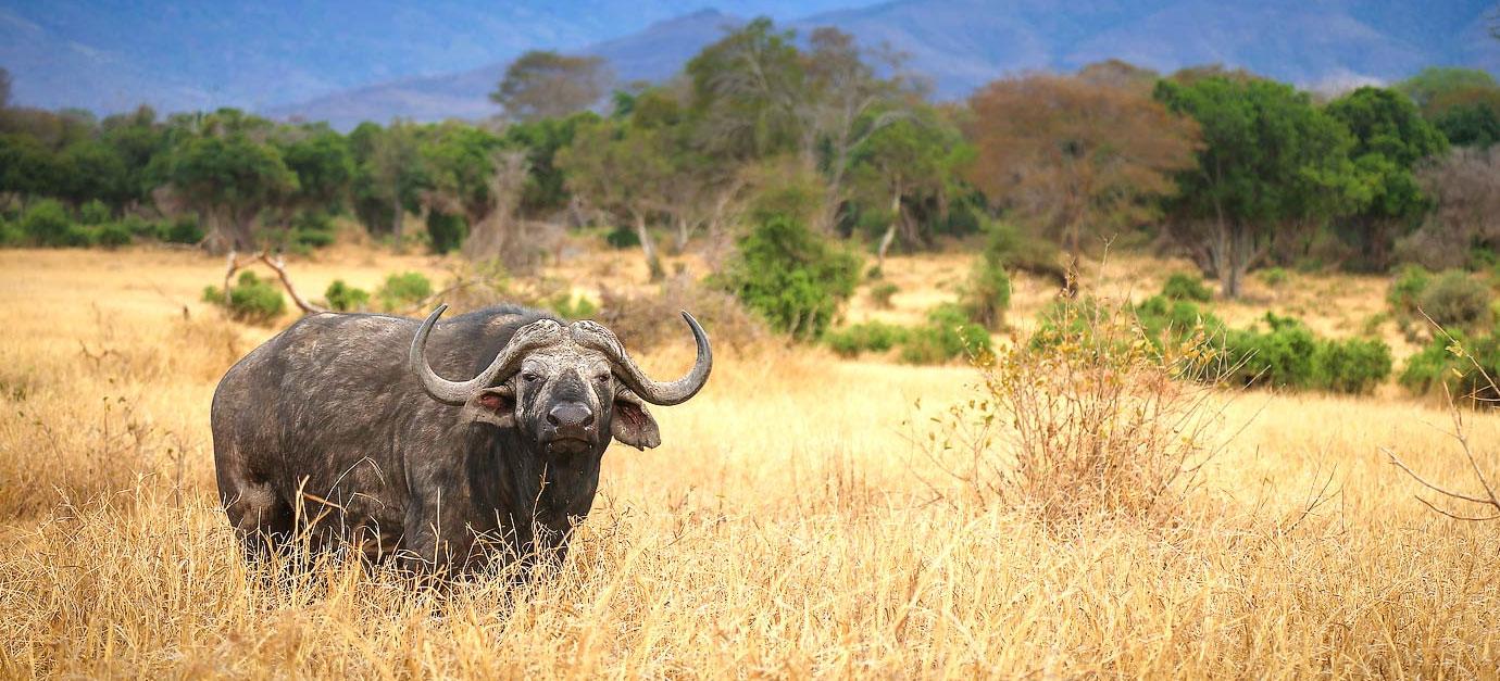 kenya-safaris-from-galu-beach-robert-safaris-adventure