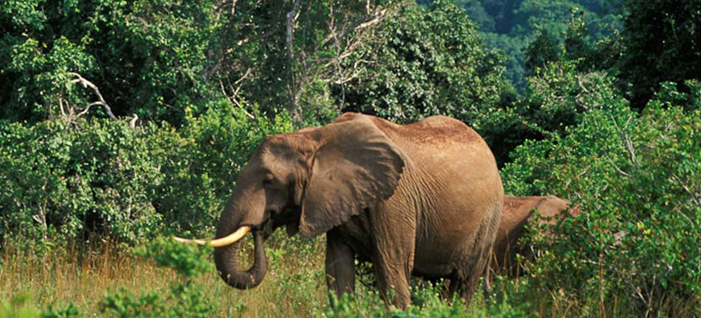 kenya-safaris-from-mombasa-shimba-hills-safaris-from-galu-beach-prices