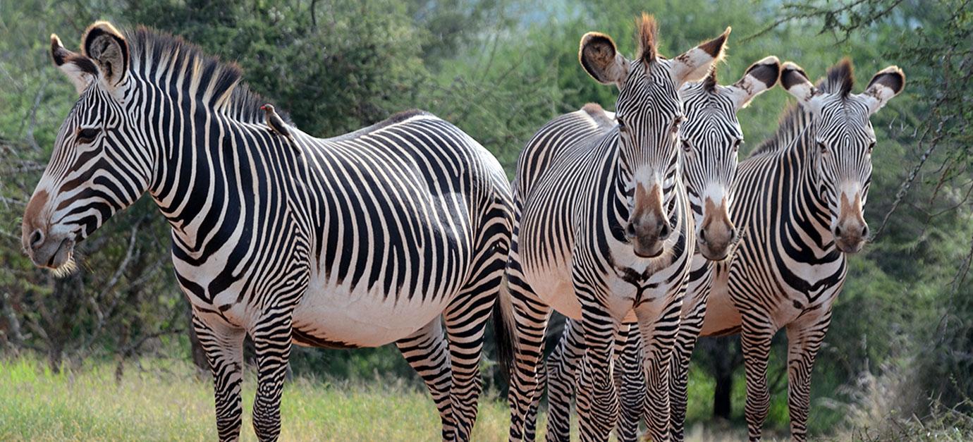 kenya-safaris-from-nairobi-robert-safaris-adventure-amboseli-masai-mara-safari-cost