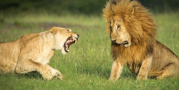 kenya-safaris-prices-from-nairobi-mombasa-galu-beach-masai-mara-amboseli-lake-nakuru-robert-safaris-adventure-kenya