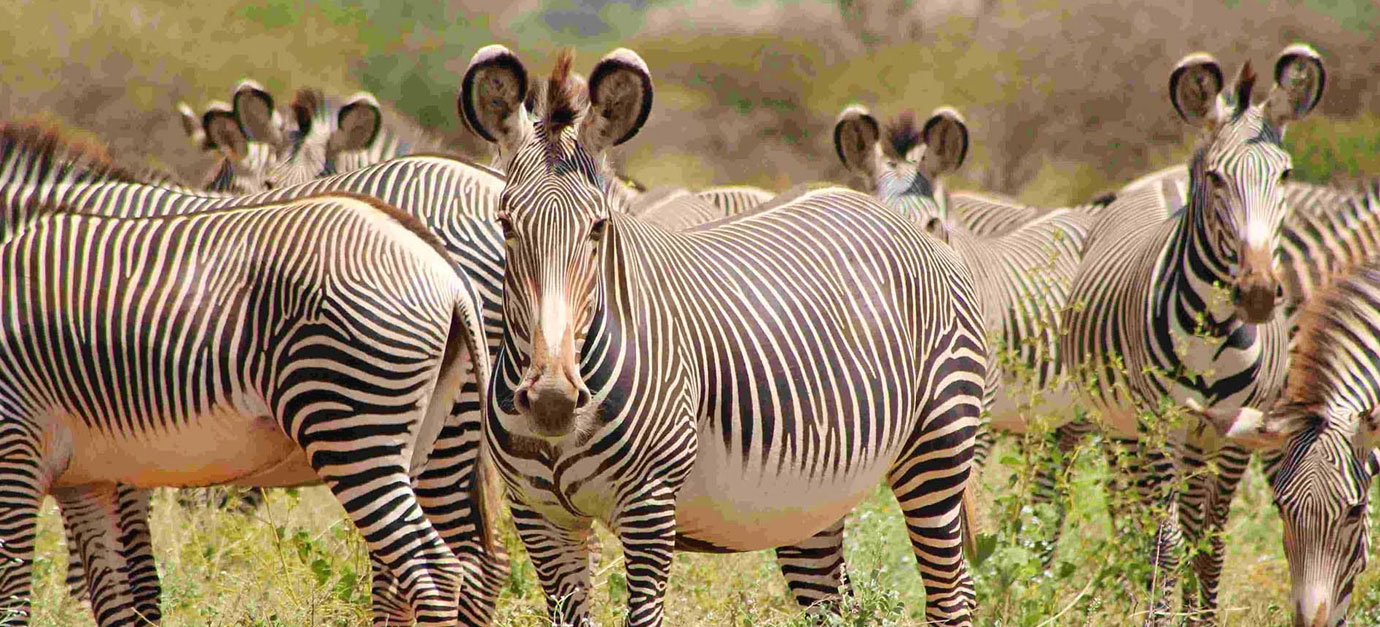 (10 Days) Kenya Adventure Safari Tour from Nairobi