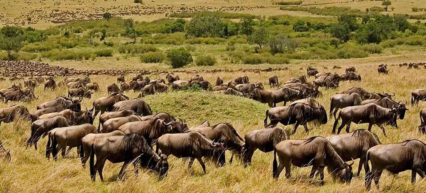 kenya-tanzania-safari-cost-robert-safaris-adventure-galu-beach-diani