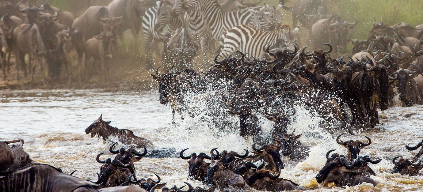Wildebeests Migration Safari Tour