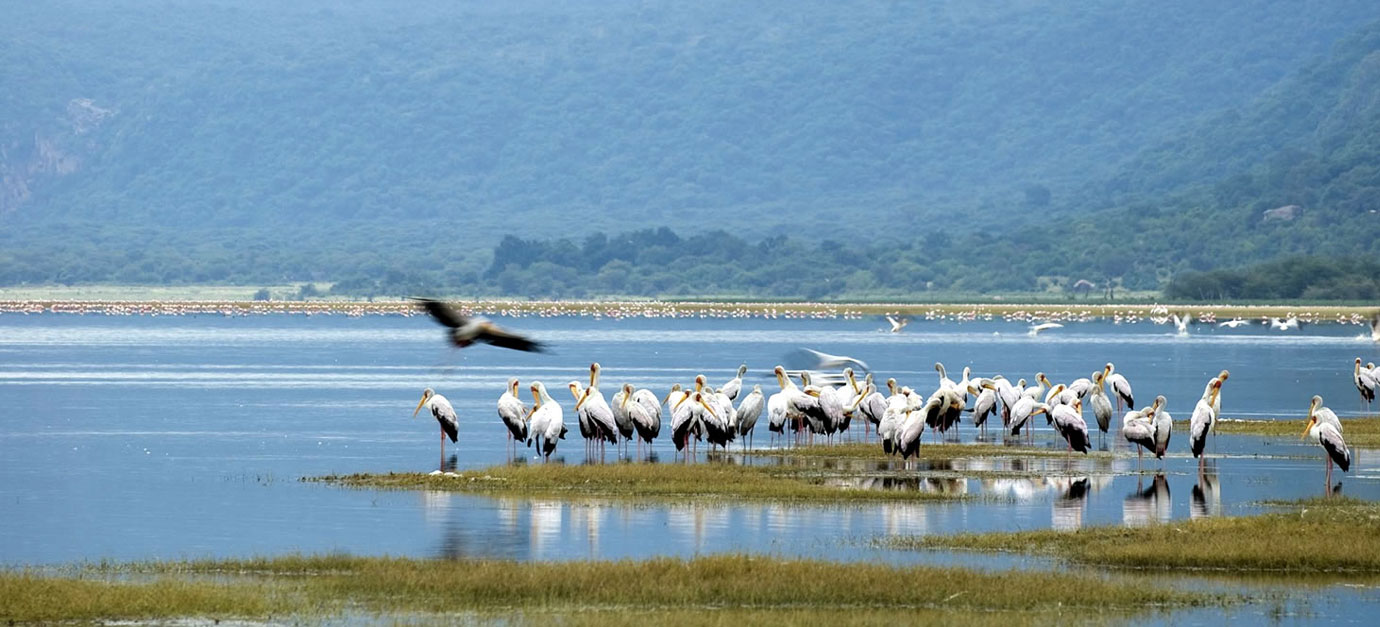 4 Days Lake Manyara, Ngorongoro and Tarangire Safari Tour from Arusha