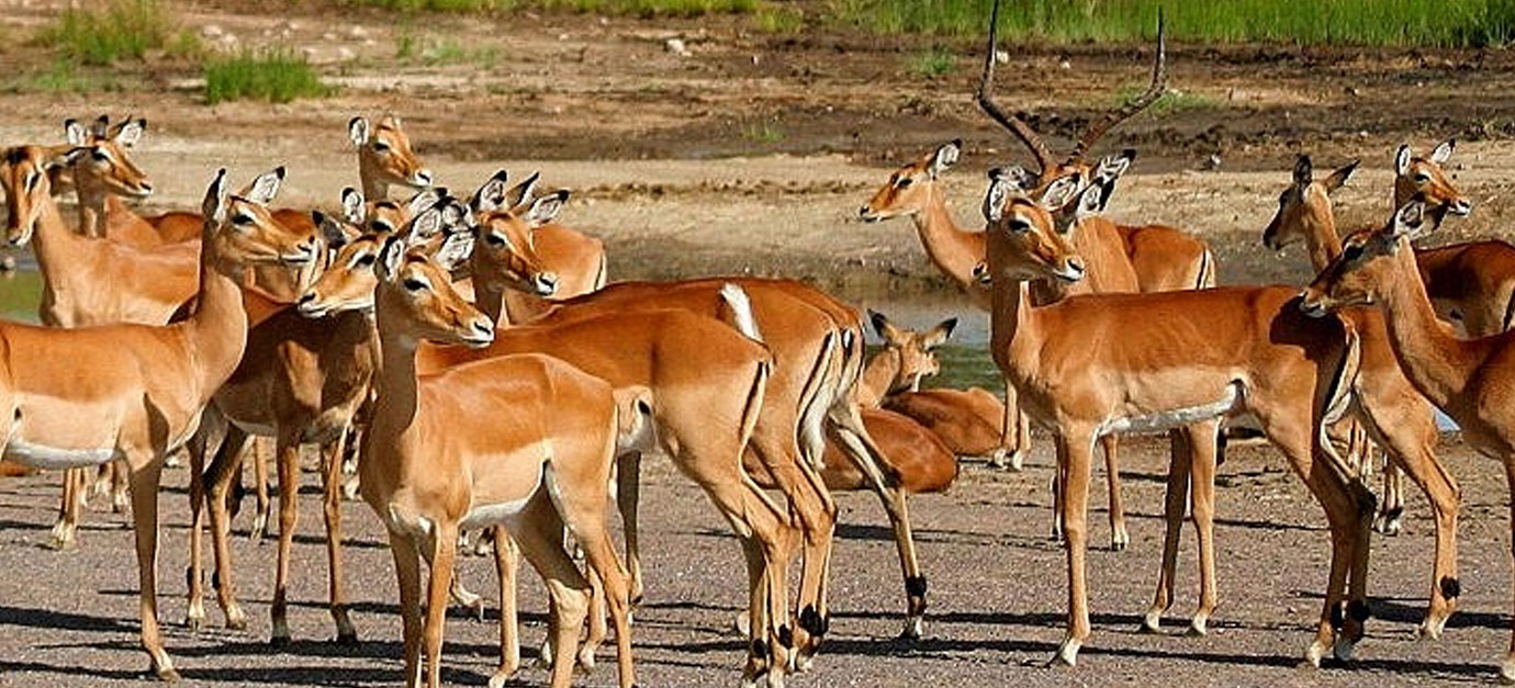 lake-manyara-national-park-safaris-from-arusha-robert-safaris-adventure-prices
