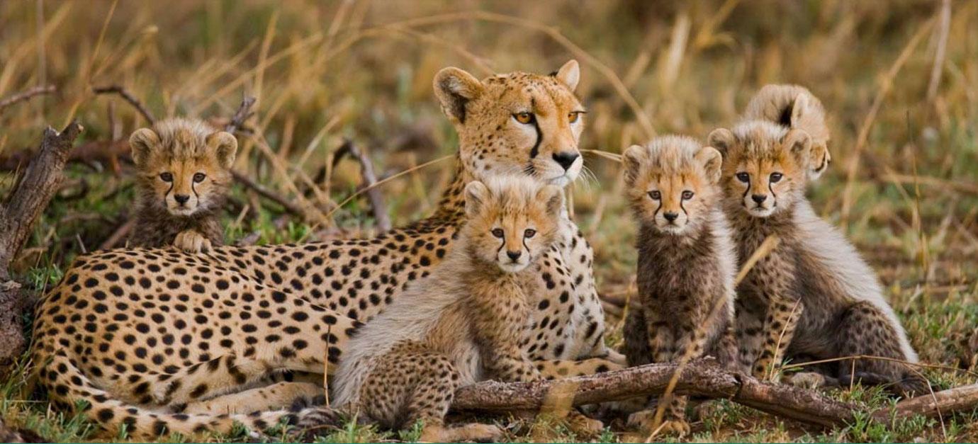 masai-mara-safari-prices-from-nairobi-robert-safaris-adventure