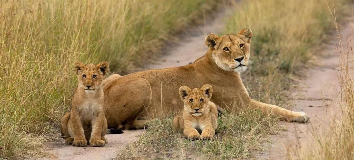 masai-mara-safaris-from-nairobi-robert-safaris-adventure-kenya-safari-cost