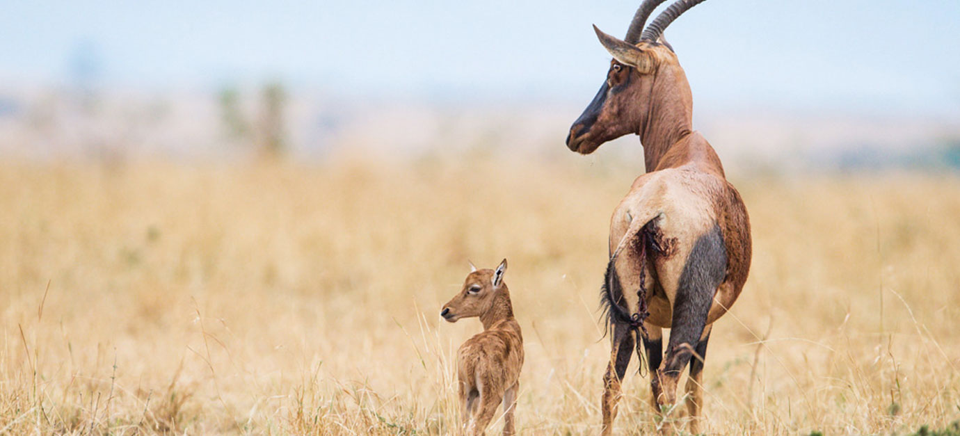 robert-safaris-adventure-kenya-safaris-from-mombasa-prices-galu-beach-kenya-holiday-prices