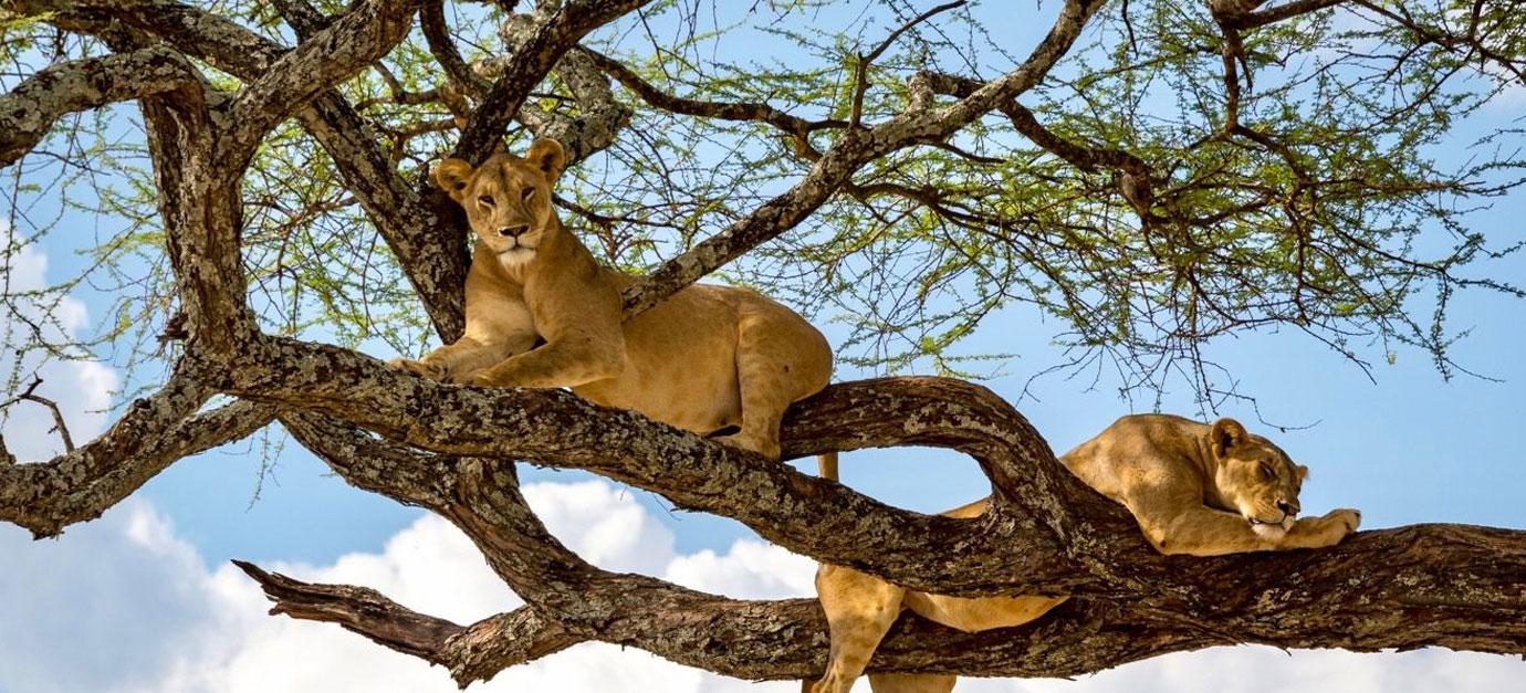 robert-safaris-adventure-kenya-safaris-in-tanzania-prices-galu-beach-diani-safaris