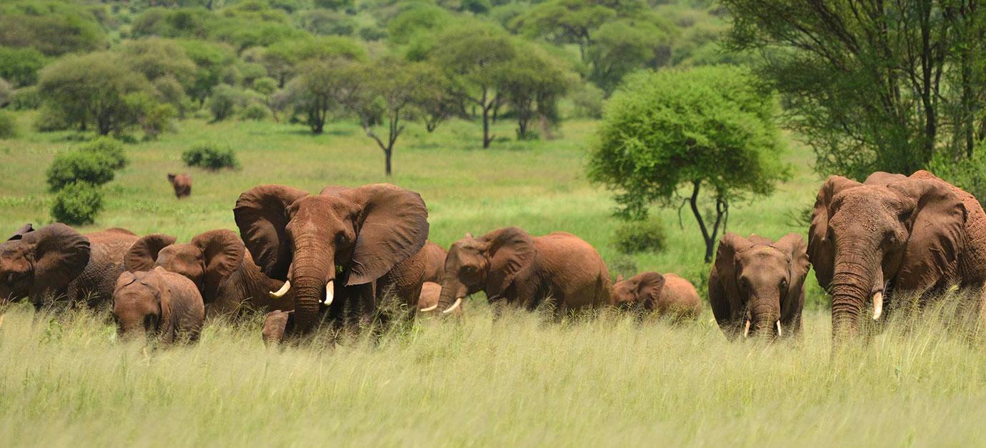 robert-safaris-adventure-kenya-tanzania-safaris-prices-diani-galu-beach