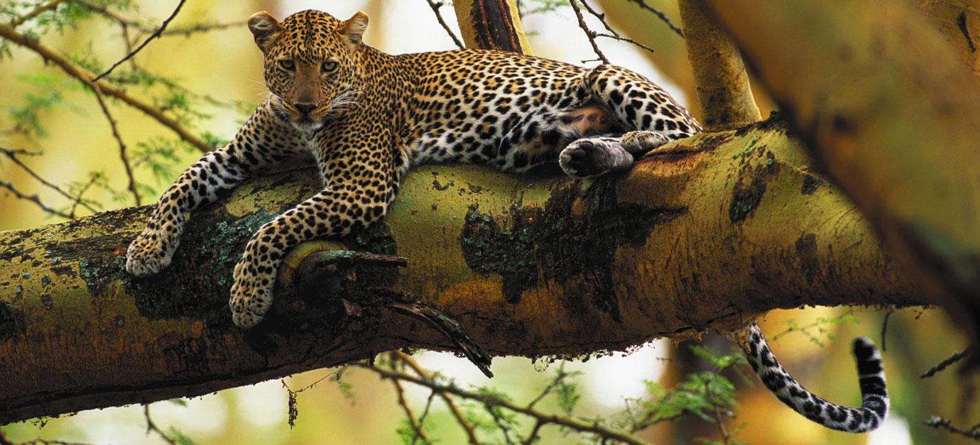 robert-safaris-adventure-lake-nakuru-safaris-from-nairobi