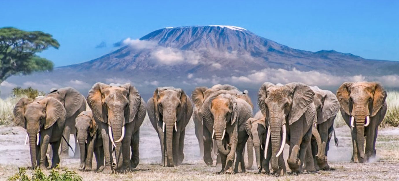 5 Days Amboseli, Lake Nakuru and Masai Mara Safari tour from Nairobi Kenya