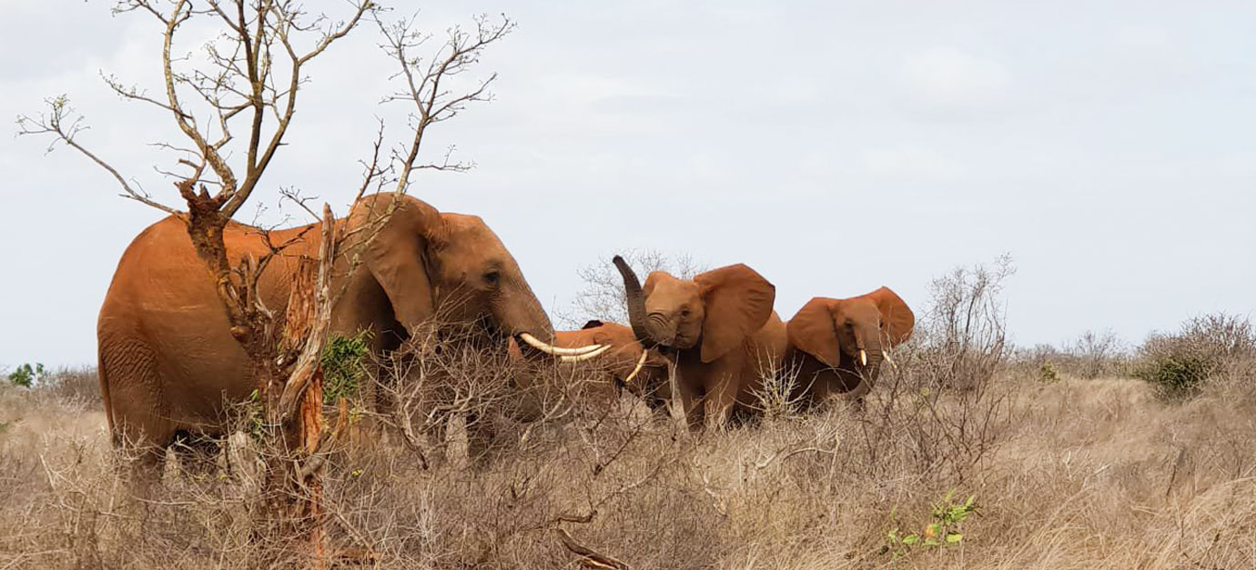 4 DAYS TSAVO EAST & AMBOSELI SAFARI TOUR FROM MOMBASA