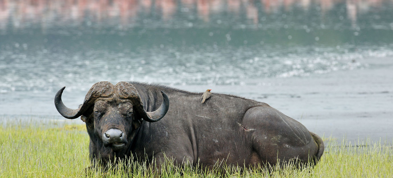 5 Days Bravo Safari-Masai Mara & Lake Nakuru National Parks