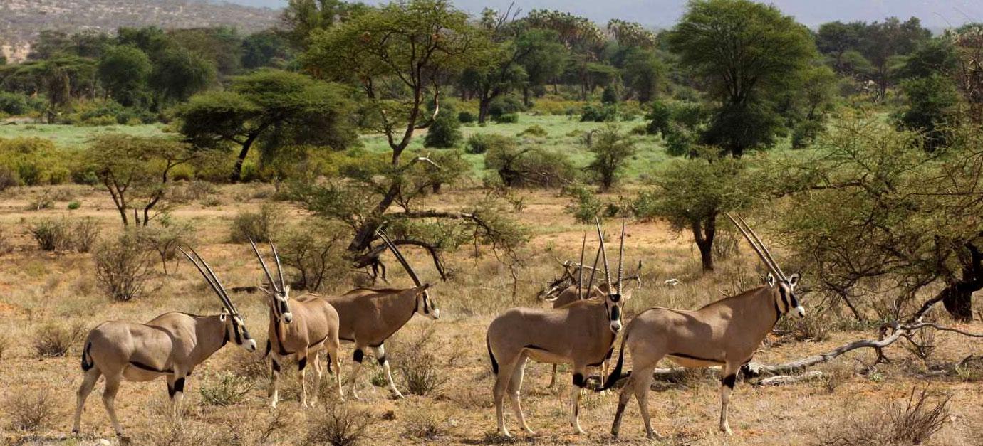 3 Days (2 Nights) Samburu Game Reserve Safari