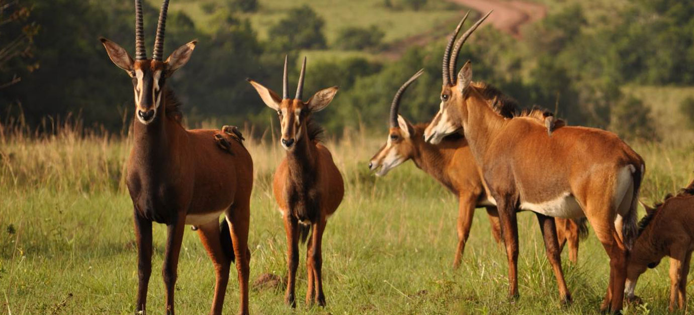 1 Day Shimba Hills Excursion from Mombasa