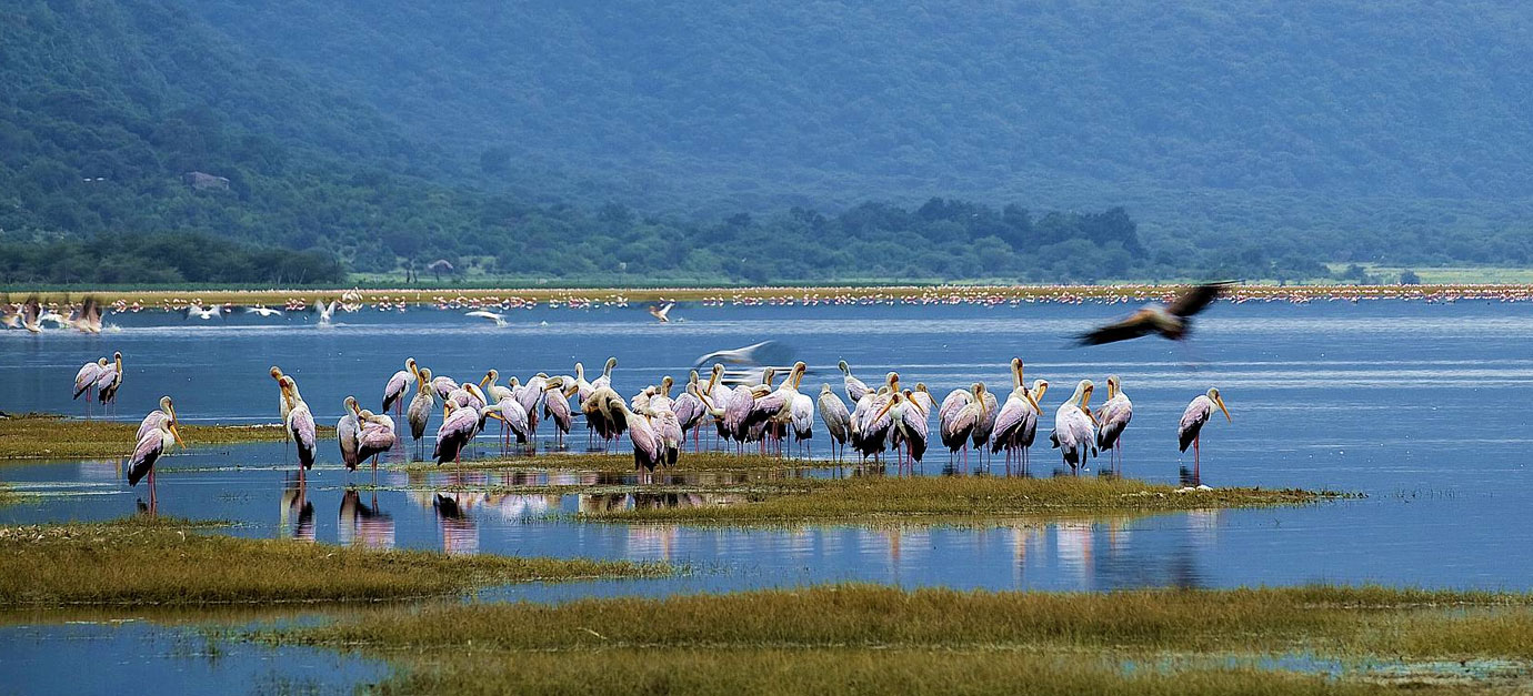 7 DAYS LAKE MANYARA /SERENGETI/ NGORONGORO/ TARANGIRE SAFARI FROM ARUSHA