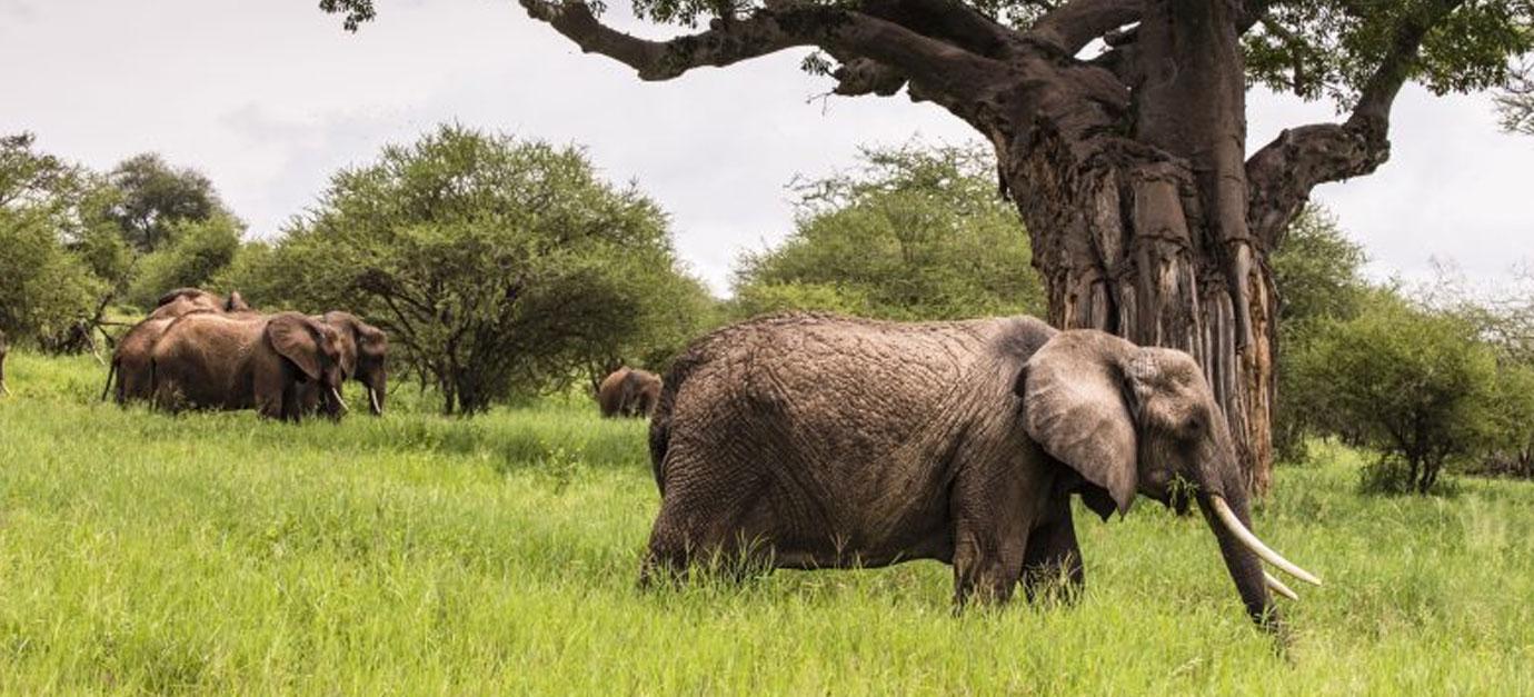tanzania-safaris-price-robert-safaris-adventure-galu-beach-safaris