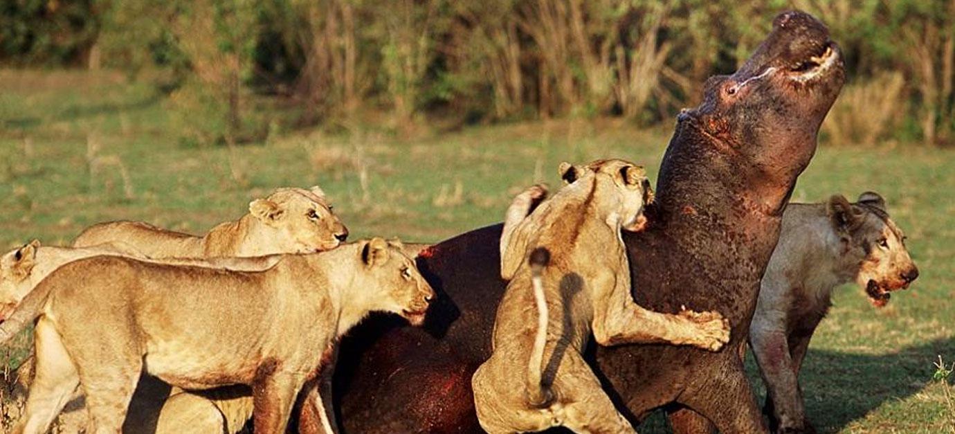 tanzania-safaris-prices-robert-safaris-adventure-lake-manyara-ngorongoro-crater-safaris-prices