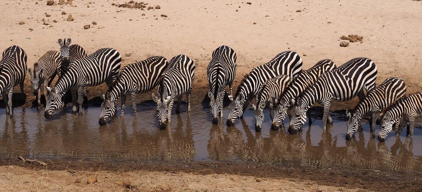 tarangire-national-park-safaris-from-arusha-robert-safaris-adventure-galu-beach