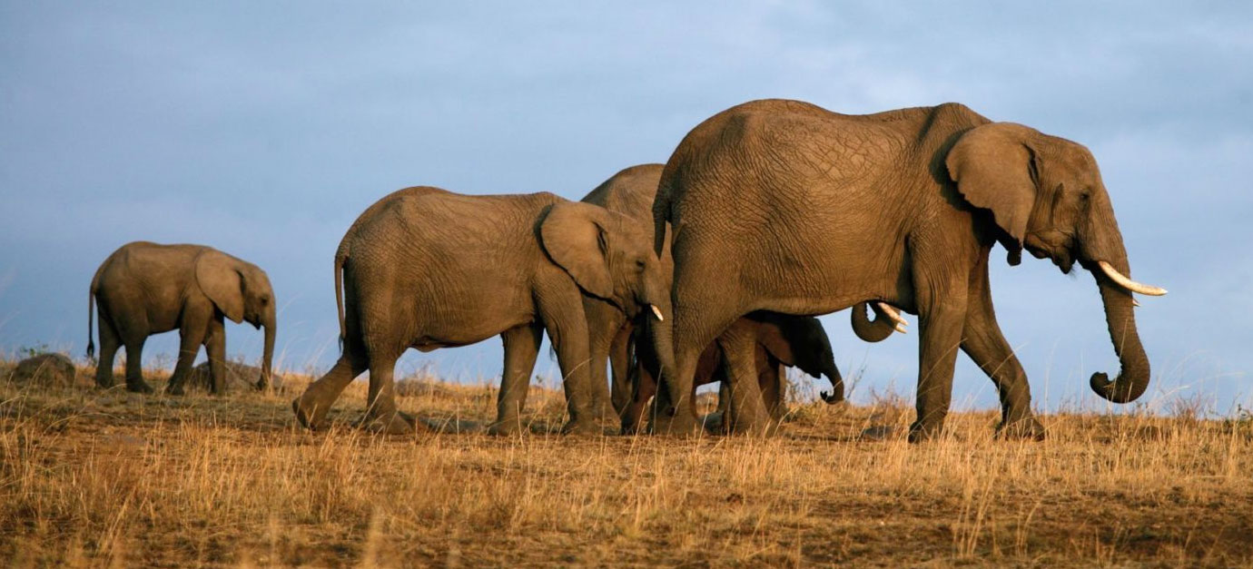 tsavo-east-west-safari-from-nairobi-amboseli-robert-safaris-adventure