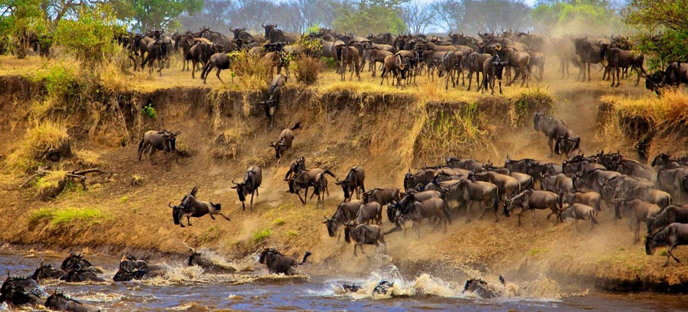 wildebeests-migration-safaris-kenya-robert-safaris-adventure