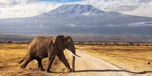 diani-beach-safari-prices-galu-beach-mombasa-tour-company-kilimanjaro