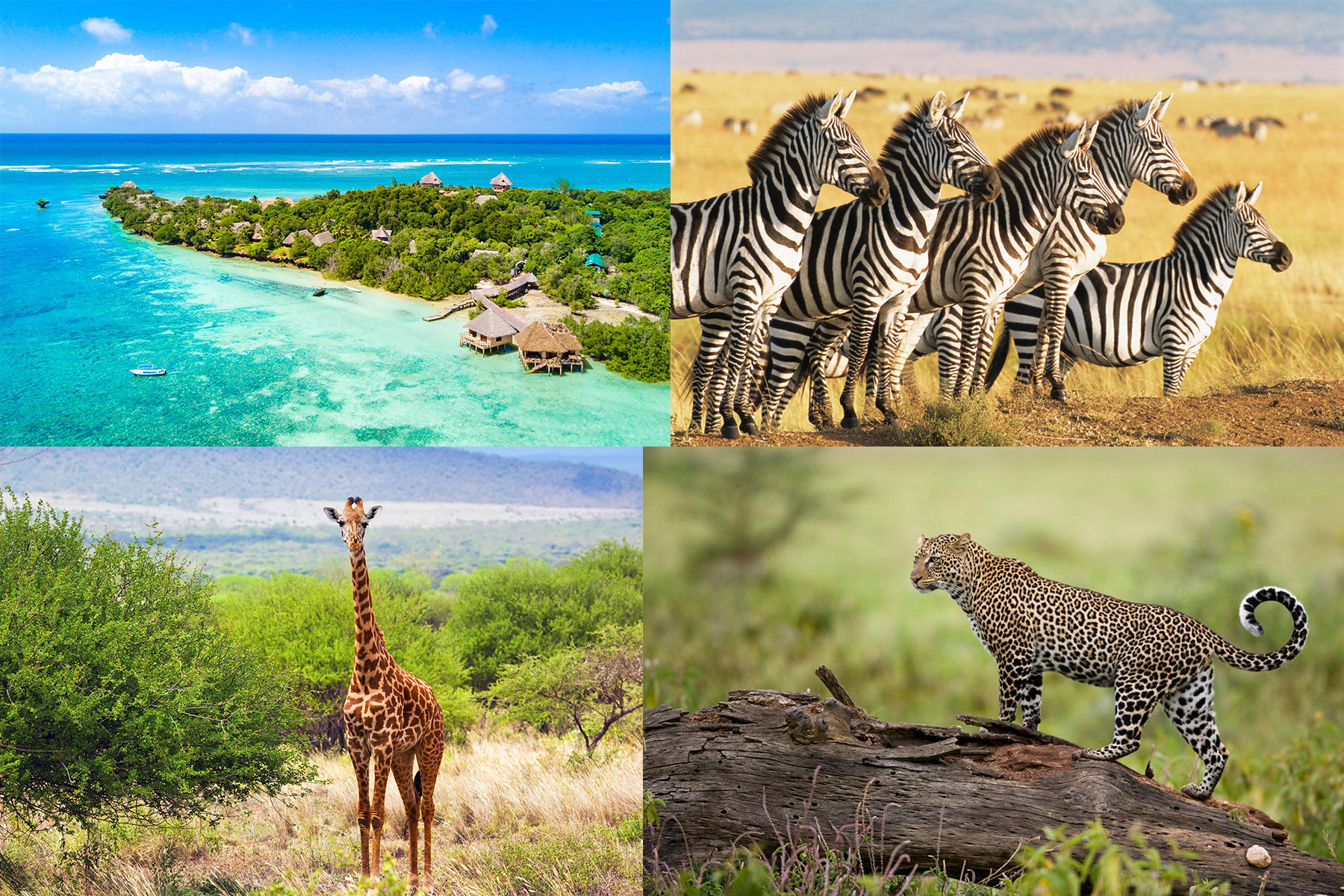 diani-beach-safari-prices-galu-beach-mombasa-tours-company-tsavo-east-west-masai-mara-amboseli-prices-nairobi