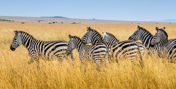 diani-beach-safari-tours-prices-galu-beach-tsavo-east-west-from-mombasa-tour-company