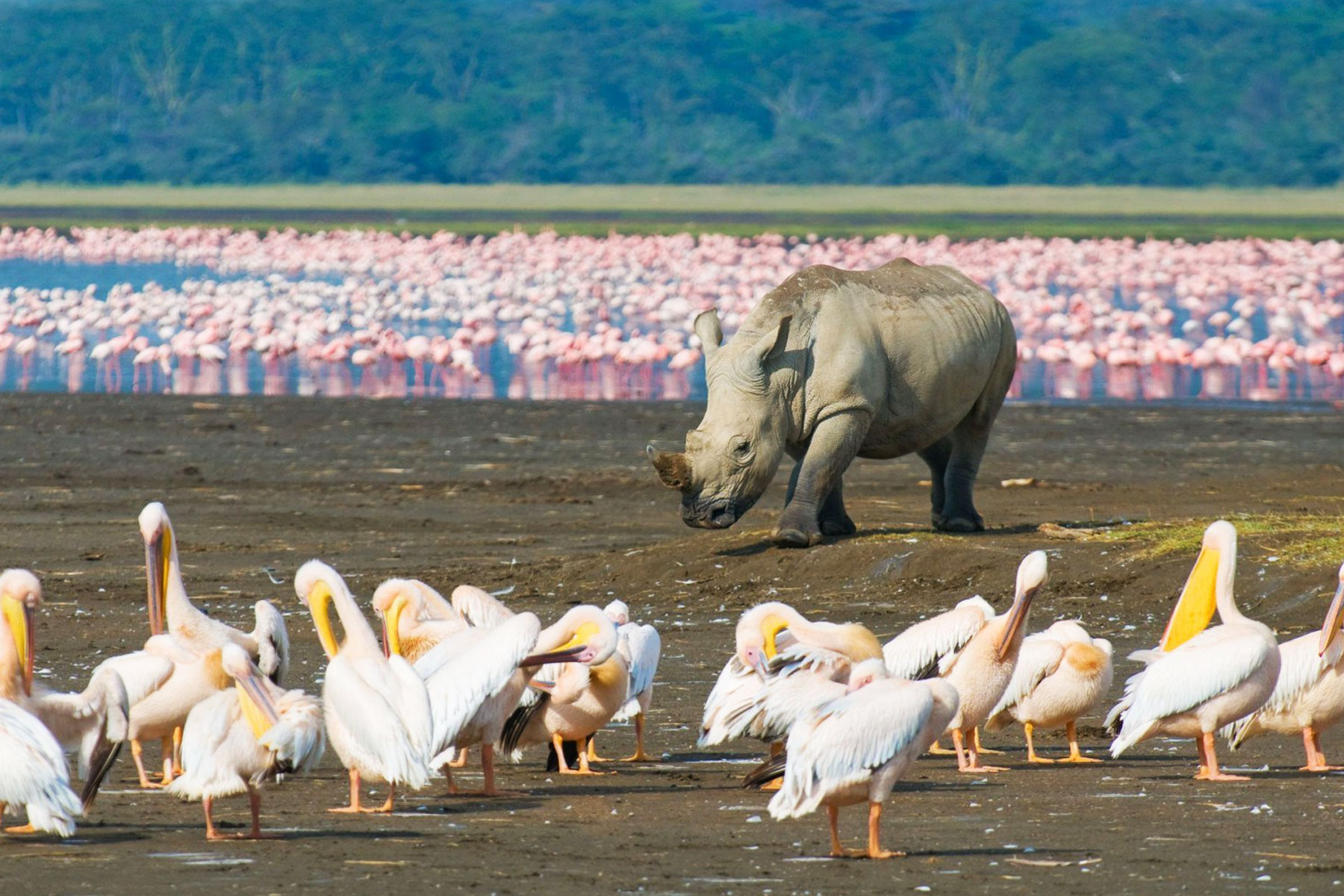 kenya-safaris-from-diani-beach-galu-beach-prices-tsavo-east-west-from-mombasa-tour-company