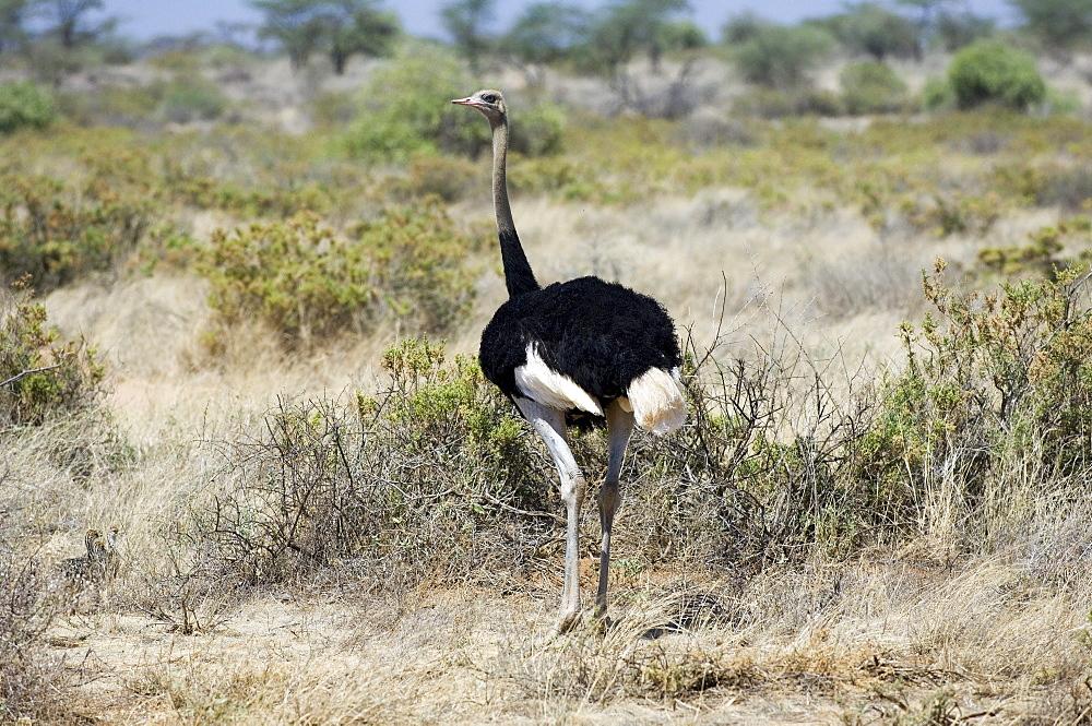 5 Day Kenya Safari to Meru & Samburu